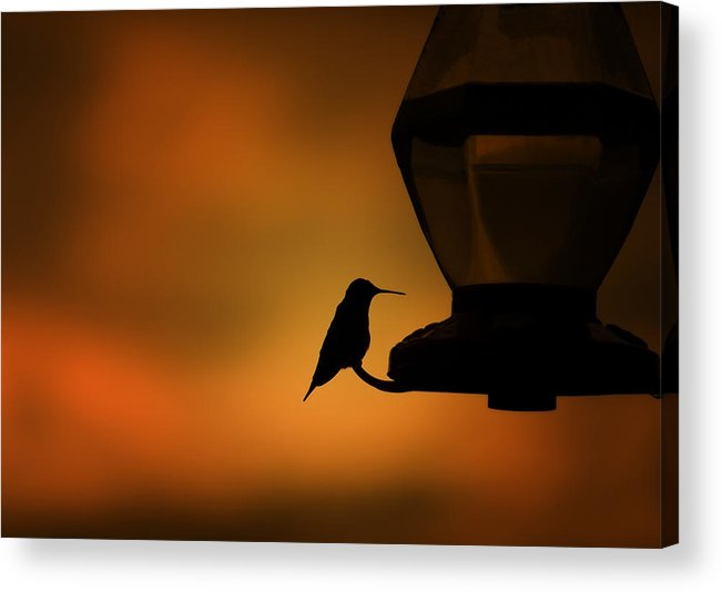 Hummingbird Acrylic Print featuring the photograph Hummingbird After The Storm by Al Mueller