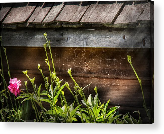 Suburbanscenes Acrylic Print featuring the photograph Insect - Spider - Charlottes Web by Mike Savad