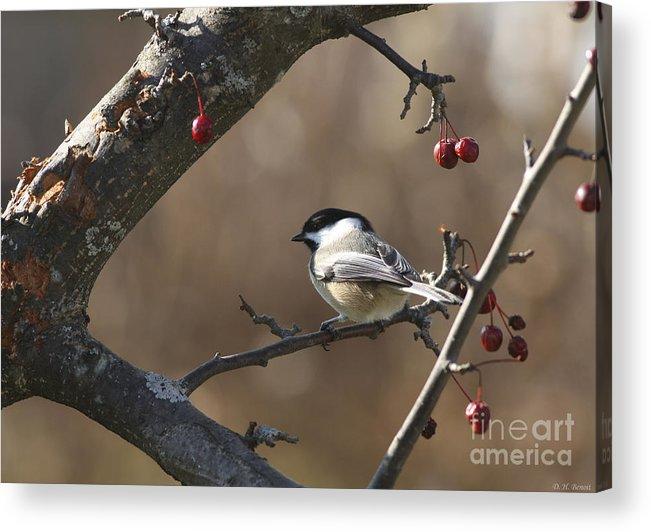 Bird Acrylic Print featuring the photograph Natures Small Wonders by Deborah Benoit
