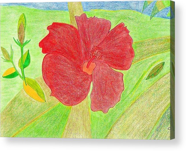 Red Flower Acrylic Print featuring the drawing Red Passion by Michael Puya
