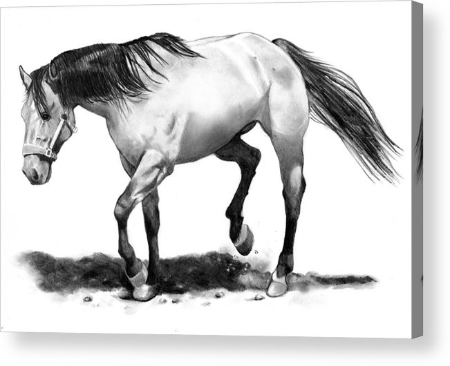 Horse Acrylic Print featuring the drawing The Stallion by Joyce Geleynse