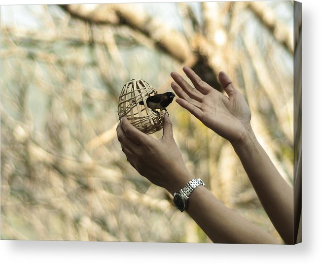 Bird Acrylic Print featuring the photograph A Bird In The Hand by Annette Dutton