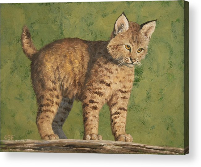 Cat Acrylic Print featuring the painting Bobcat Kitten by Crista Forest