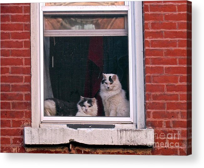 Cats Acrylic Print featuring the photograph Cats On A Sill by Randi Shenkman