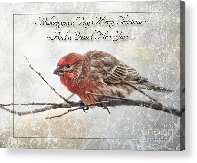 Animals Acrylic Print featuring the photograph Crouching Finch Christmas Greeting Card by Debbie Portwood