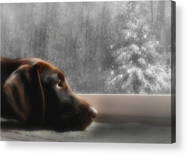 Sienna Acrylic Print featuring the photograph Dreamin' Of A White Christmas by Lori Deiter