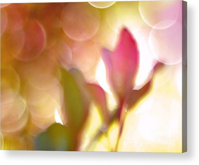 Surreal Fantasy Floral Prints Acrylic Print featuring the photograph Dreamy Ethereal Pink Tulip Bokeh Circles by Kathy Fornal