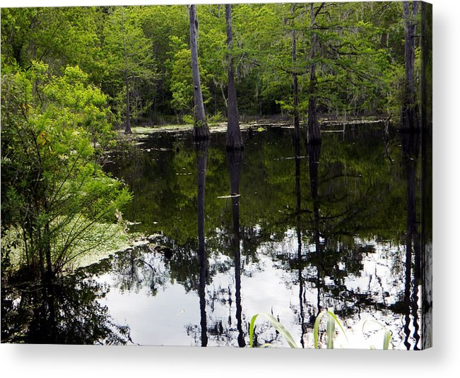 East Texas Acrylic Print featuring the photograph East Texas Cyprus Pond by Shere Crossman