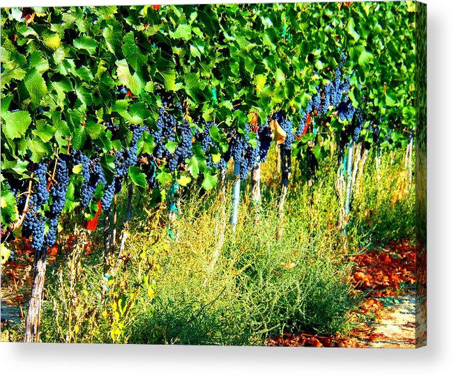 Grapes Acrylic Print featuring the photograph Fruit Of The Vine by Kay Gilley
