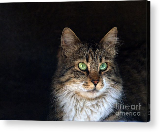 Animal Acrylic Print featuring the photograph Green Eyes by Stelios Kleanthous