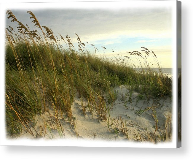 Beach Acrylic Print featuring the photograph In The Dunes by Barbara Northrup