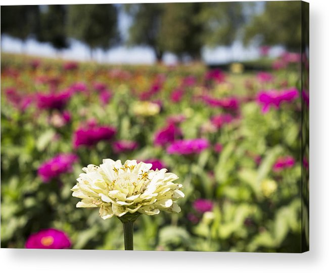 Flowers Acrylic Print featuring the photograph Leader Of The Patch by Bailey Barry