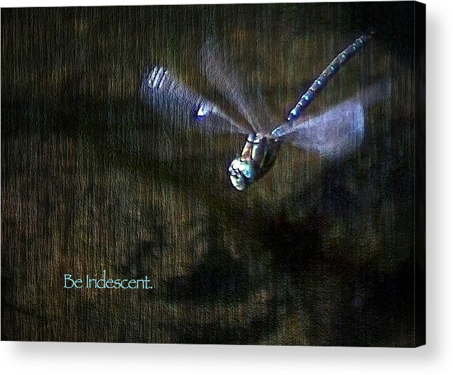 Dragonfly Acrylic Print featuring the digital art Lessons From Nature 1 - Be Iridescent by Belinda Greb