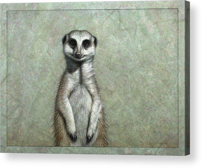 Meerkat Acrylic Print featuring the painting Meerkat by James W Johnson