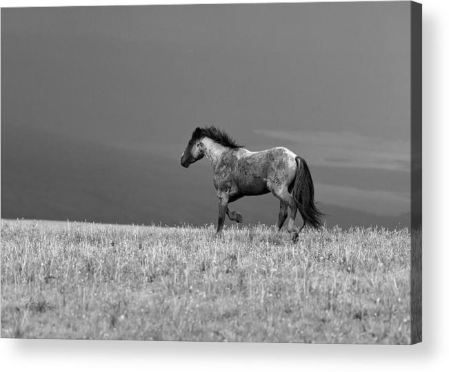 Beautiful Acrylic Print featuring the photograph Mustang 2 Bw by Roger Snyder