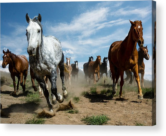 Horse Acrylic Print featuring the photograph On The Run by Bob Keller