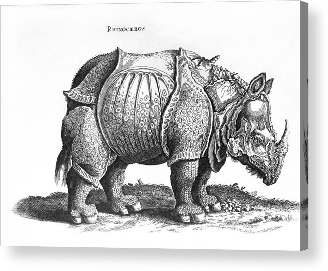 Rhino Acrylic Print featuring the drawing Rhinoceros No 76 From Historia Animalium By Conrad Gesner by Albrecht Durer