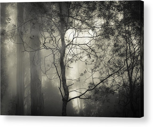 Fog Acrylic Print featuring the photograph Silent Stirring by Amy Weiss