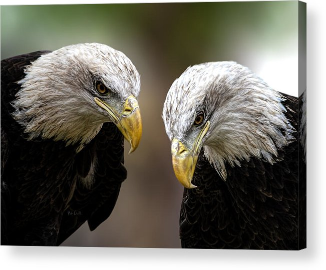 Eagles Acrylic Print featuring the photograph Soul Mates by Bob Orsillo