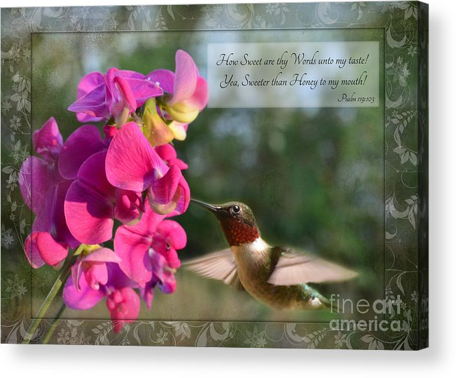 Nature Acrylic Print featuring the photograph Sweet Pea Hummingbird Iv With Verse by Debbie Portwood