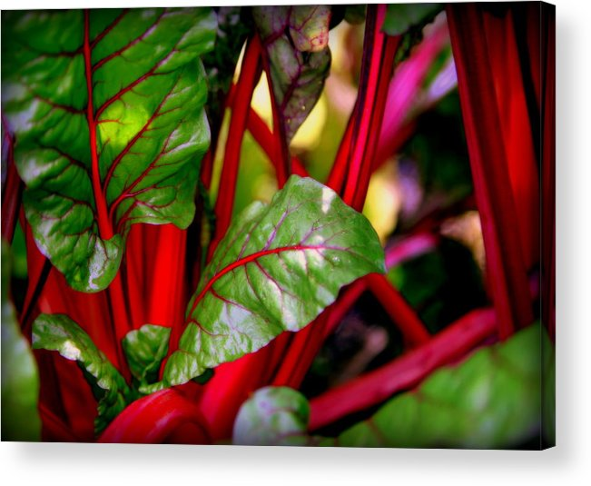 Kettuce Acrylic Print featuring the photograph Swiss Chard Forest by Karen Wiles