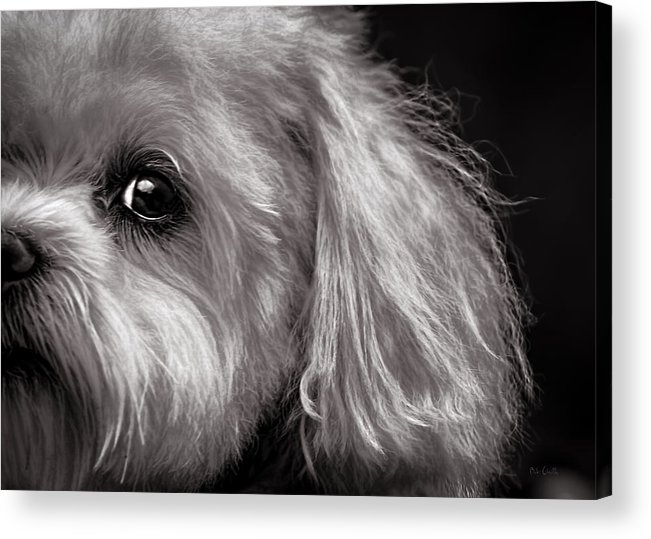 Dog Acrylic Print featuring the photograph The Dog Next Door by Bob Orsillo