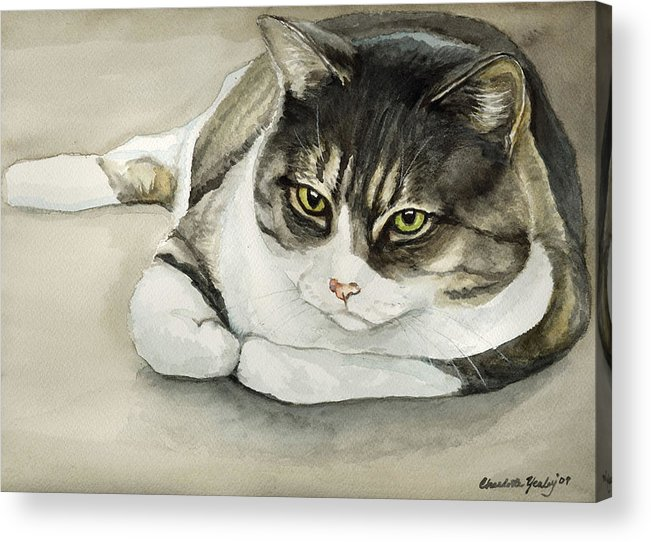 Cat Acrylic Print featuring the painting Tubby by Charlotte Yealey