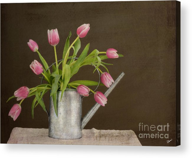 Tulips Acrylic Print featuring the photograph Tulip Bouquet by Alana Ranney