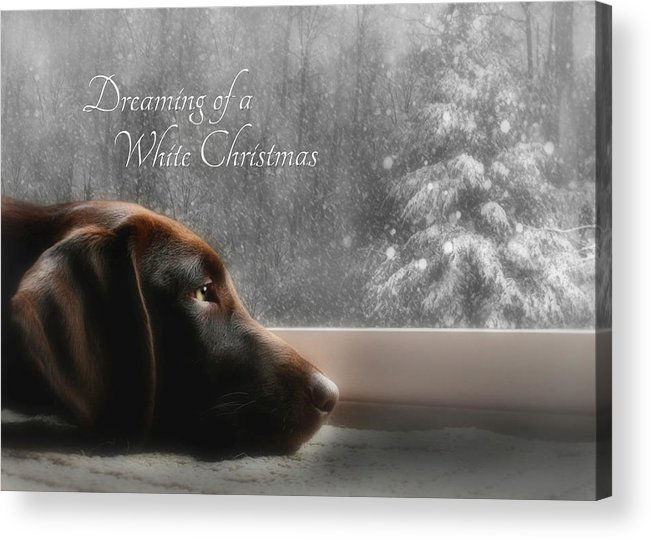 Sienna Acrylic Print featuring the photograph White Christmas by Lori Deiter