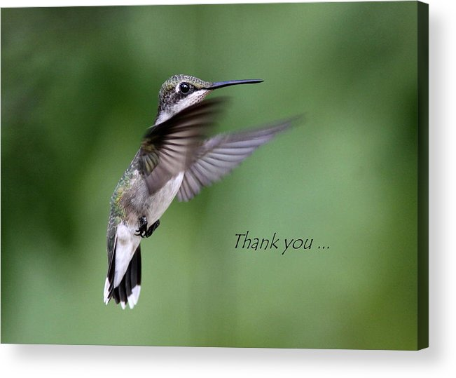 Thank You Acrylic Print featuring the photograph Thank You Card by Travis Truelove