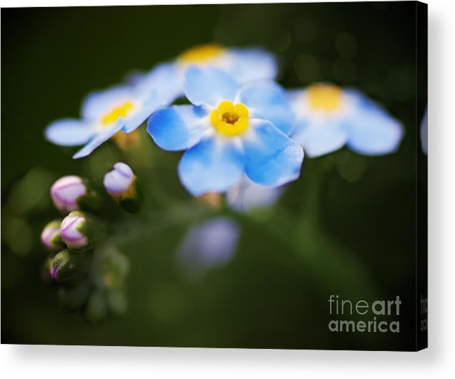 Flower Acrylic Print featuring the photograph Flower by James Taylor