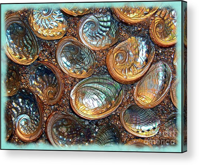 Abalones Acrylic Print featuring the photograph Abalones by Judi Bagwell