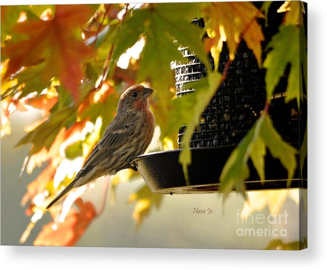Nava Jo Thompson Acrylic Print featuring the photograph Breakfast With A View by Nava Thompson