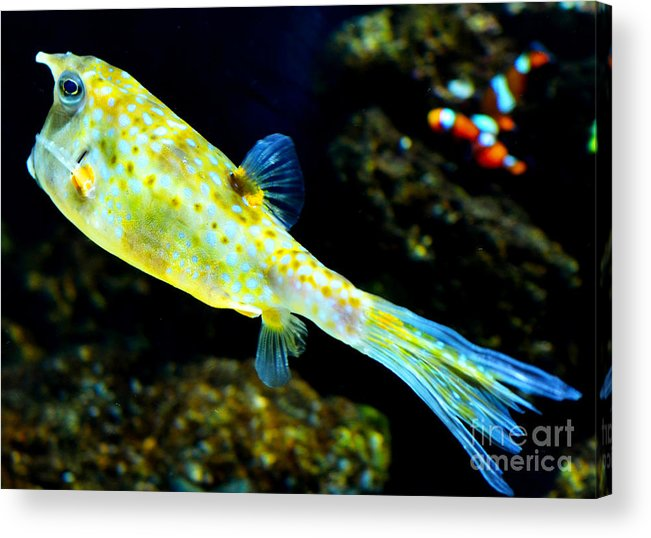 Fish Acrylic Print featuring the photograph Exotic Fish by Pravine Chester