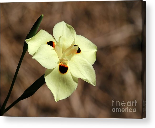 Flower Acrylic Print featuring the photograph Funny Face Flower by Sabrina L Ryan