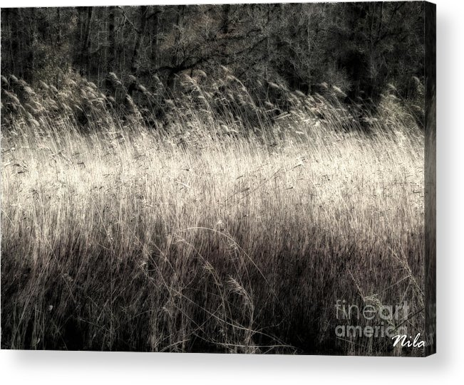 Nature Acrylic Print featuring the photograph Jungle Grass by Nilay Tailor