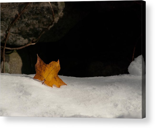 October Snow Fall Acrylic Print featuring the photograph Lone Leaf by Tobey Brinkmann