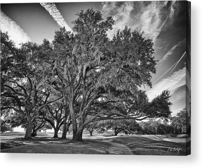 Beaufort County Acrylic Print featuring the photograph Moss-draped Live Oaks by Phill Doherty
