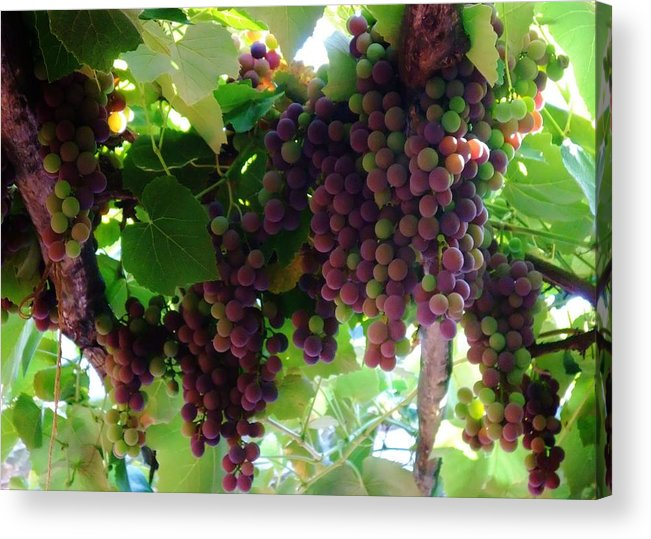 Wine Acrylic Print featuring the photograph New Wine by Alison Richardson-Douglas