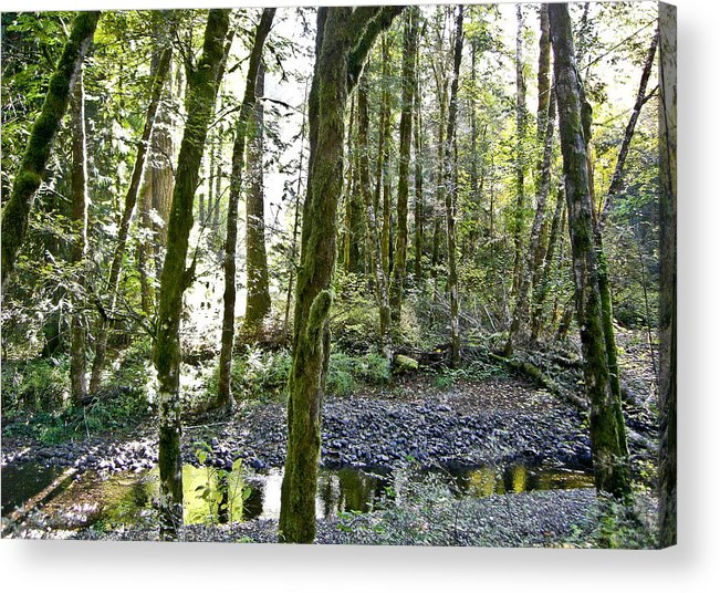 Oregon Acrylic Print featuring the photograph Oregon Forest by Cheryl Colaw
