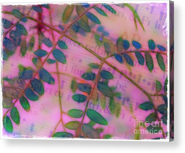 Song Acrylic Print featuring the photograph Song Of The Honey Locust by Judi Bagwell