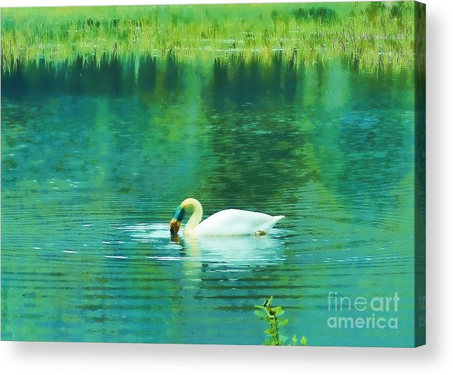 Swan Acrylic Print featuring the photograph Swan Lake by Judi Bagwell