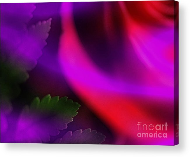Leaf Acrylic Print featuring the photograph The Leaf And The Rose by Judi Bagwell