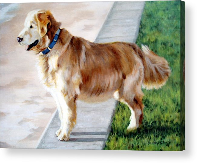 Dog Acrylic Print featuring the painting The Patient Golden by Sandra Chase