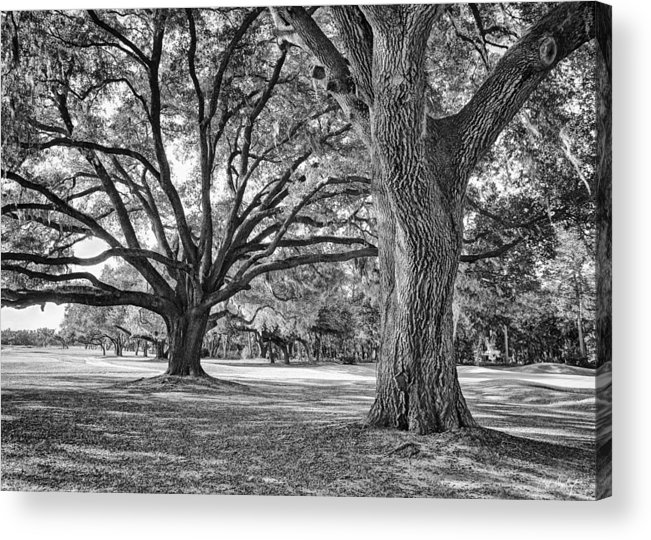 Beaufort County Acrylic Print featuring the photograph Under The Oaks by Phill Doherty