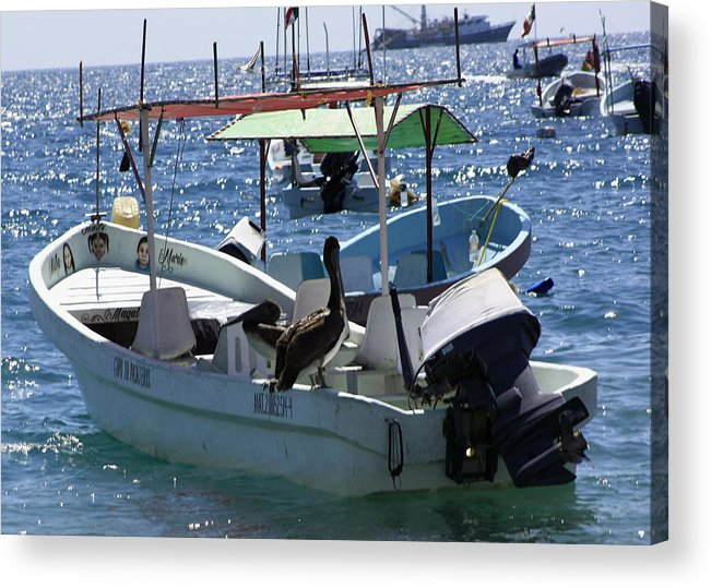 Pelican Acrylic Print featuring the photograph A Pelican Taking A Boat Ride At Playa Manzanillo by James Connor
