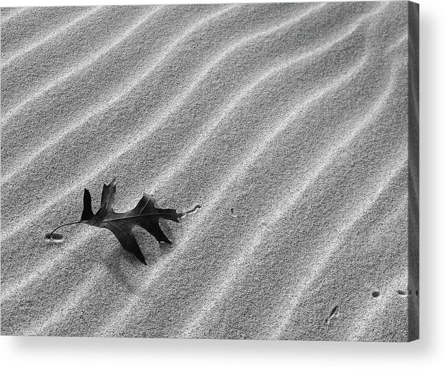Leaf Acrylic Print featuring the photograph Alone by Kathi Mirto