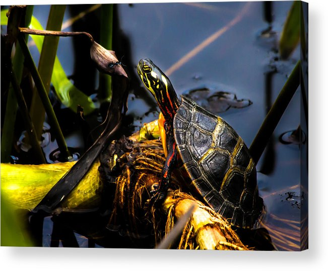 Turtles Acrylic Print featuring the photograph Ant Meets Turtle by Bob Orsillo