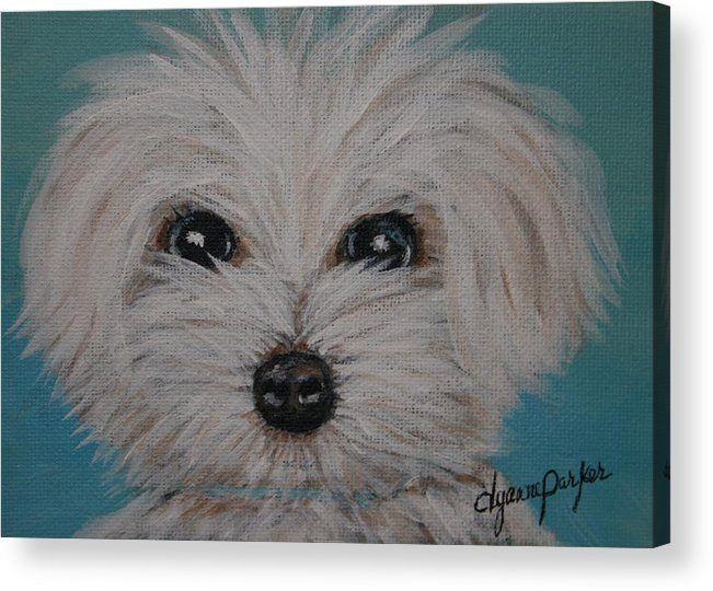 Dog Acrylic Print featuring the painting Baby Blue by Dyanne Parker