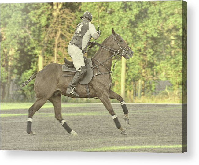 Polo Acrylic Print featuring the photograph Back Shot by JAMART Photography